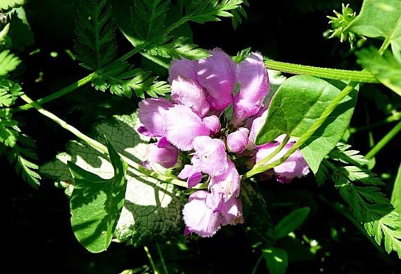 fleurs1.06-024.JPG