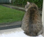 Activités de chats pour un jour de pluie