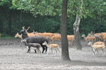 Serengeti park 2013 441