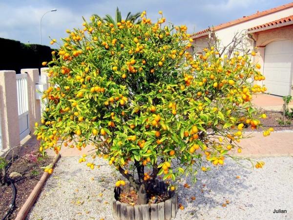 L06 - Kumquat