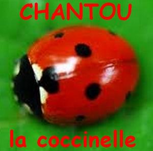 CHANTOU  LA COCCINELLE