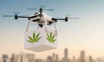 Le transport de la drogue ...