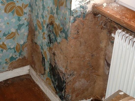 Maison infect e par un champignon de type m rule comment faire bien bricoler la maison - Champignon de maison merule ...