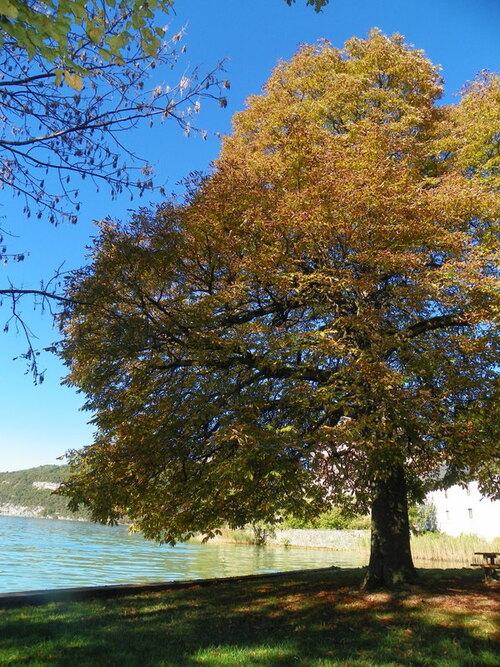 Balade au bord du lac à Duingt ( 1 )