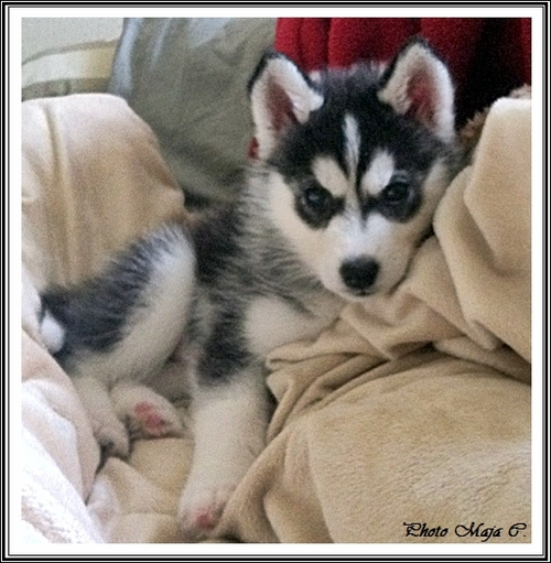 Elfie (2 mois)