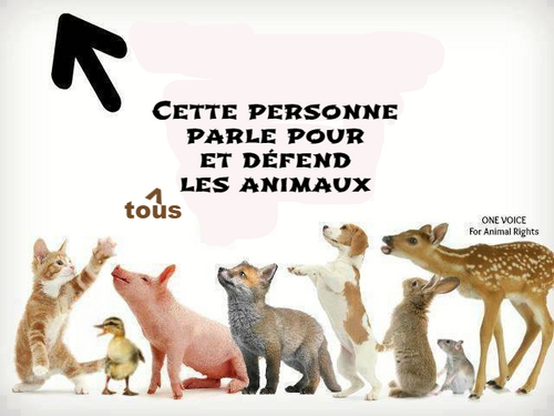 Pour la protection des animaux, contre la matrataince animale