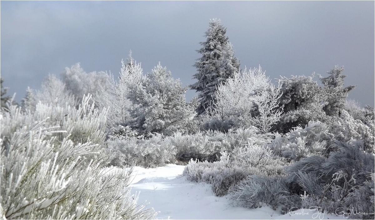 Le paradis blanc