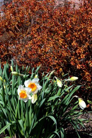 Seeds of Love à la Roseraie