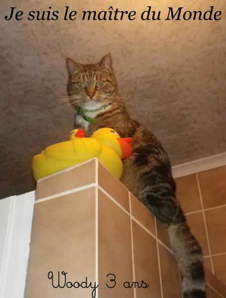 Vivre avec un Bad Cat
