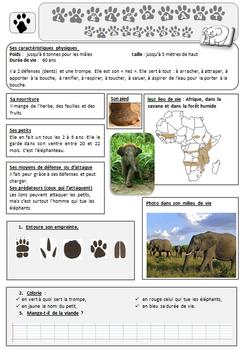 lecture doc éléphant d'Afrique