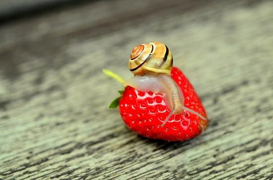 strawberry-799597_1280