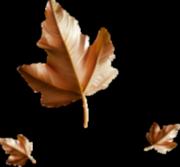 *** 418 _ les feuilles d'or de l'automne ***