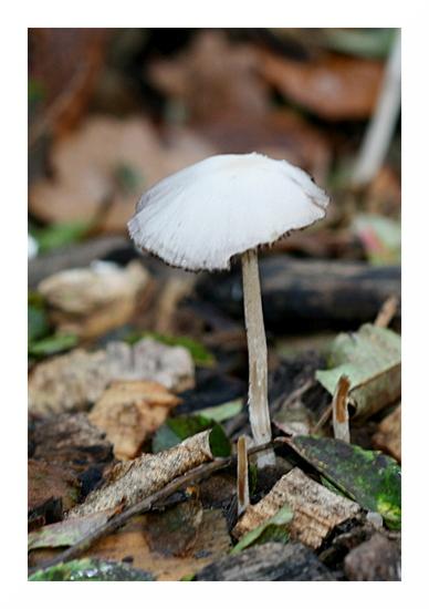 Divers champignons