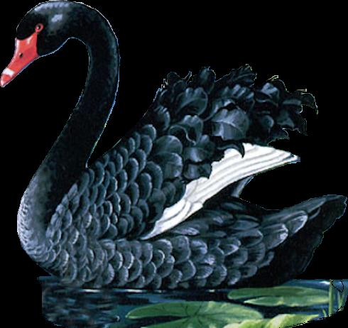 Tubes oiseaux