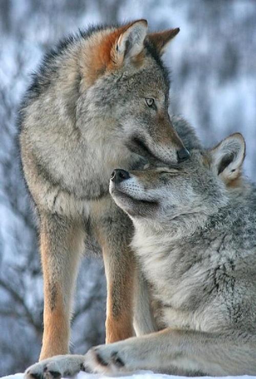 Belles images d'animaux.