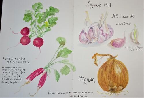 les légumes crus, aquarelles