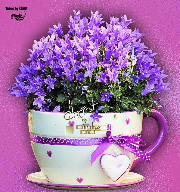 Campanules violettes.