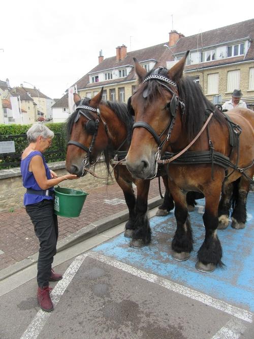 Les promenades en calèche de François Desliens ont animé l'été Châtillonnais !