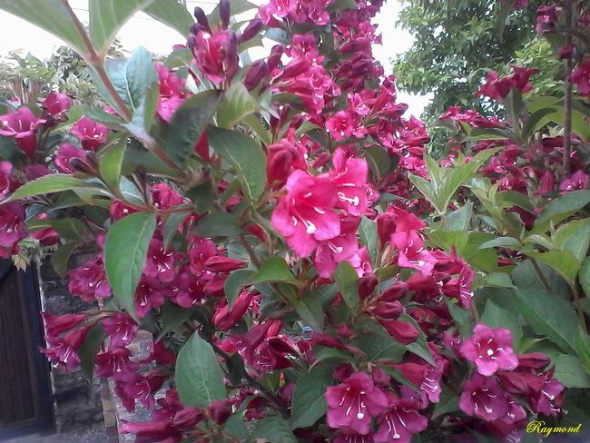 Dernieres fleurs.