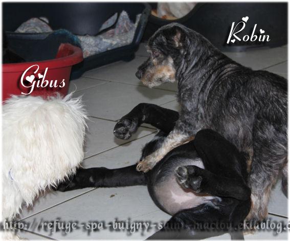 Robin - 06/12/12