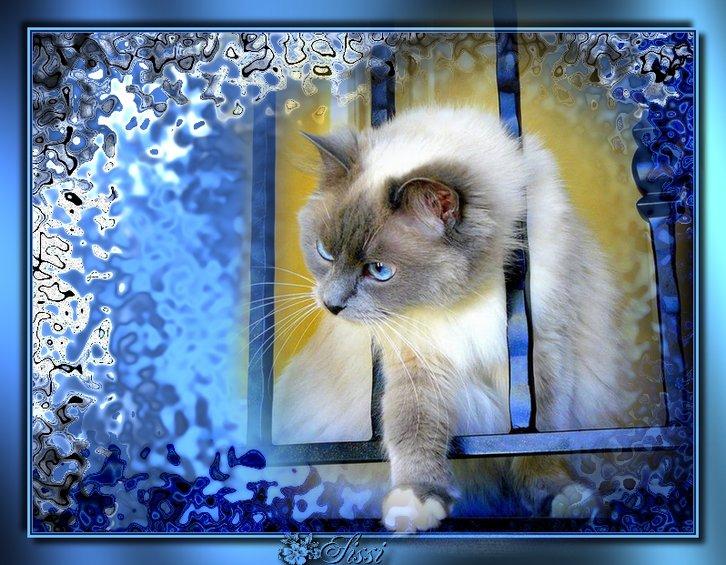 *Mon Chat Bleu *