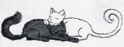 Je ne sais pas dessiner les chats