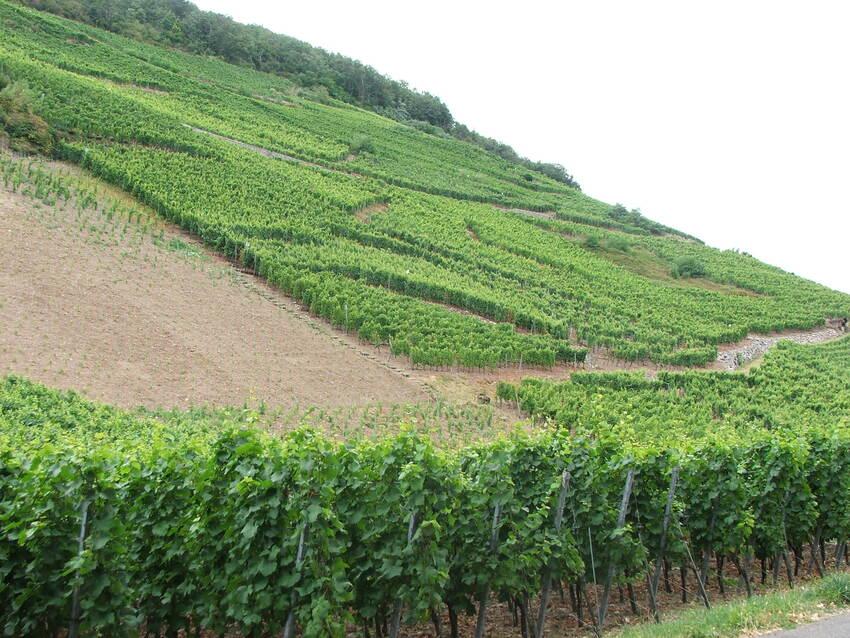 l'Alsace  en 2008 dept  67 - 68