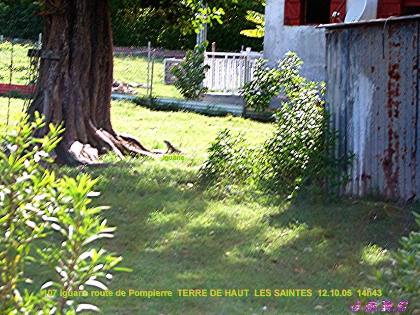 VACANCES GUADELOUPE  7/16  TERRE DE HAUT  10 - 17/10/2005  D  26/03/2015