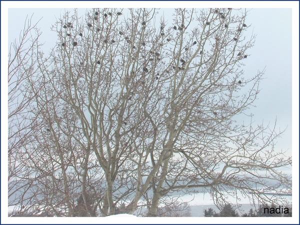 Petits oiseaux après une chute de neige