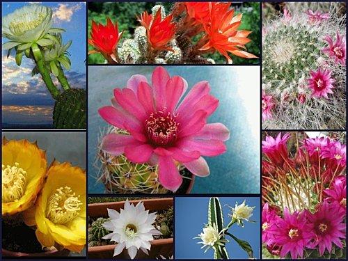 cactus-montage.jpg