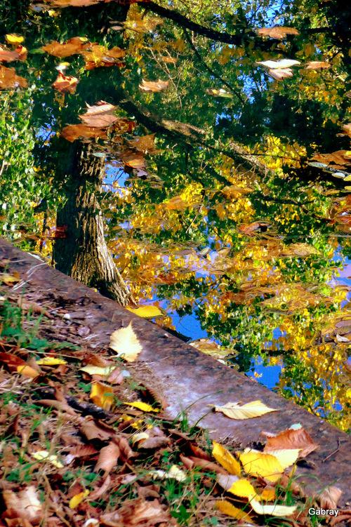 Canal du Midi: feuilles dans l'eau