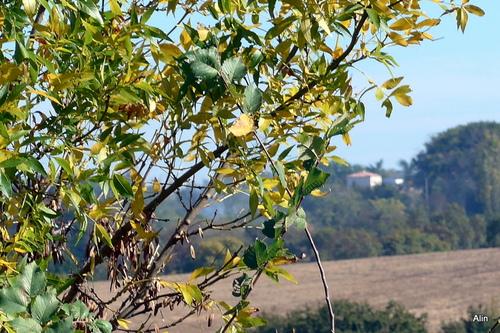 Ramure des arbres en automne