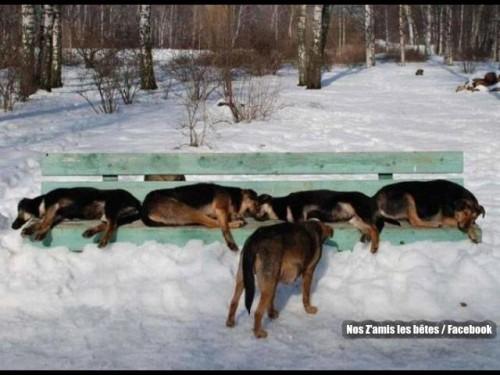 banc-chiens.jpg