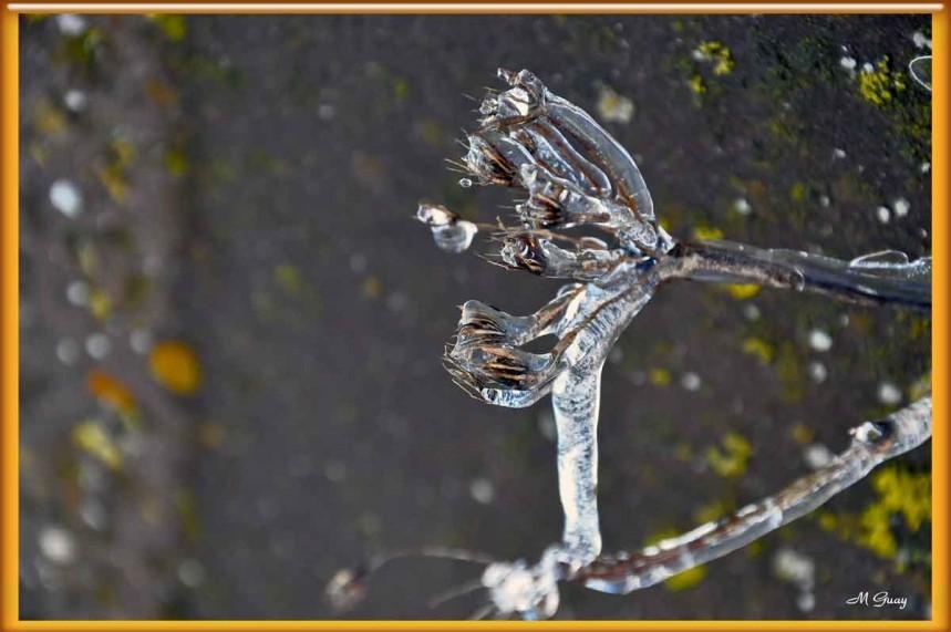larme-de-glace-3794