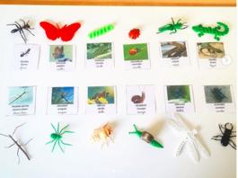 Ateliers, jeux de langage autour d'un imagier