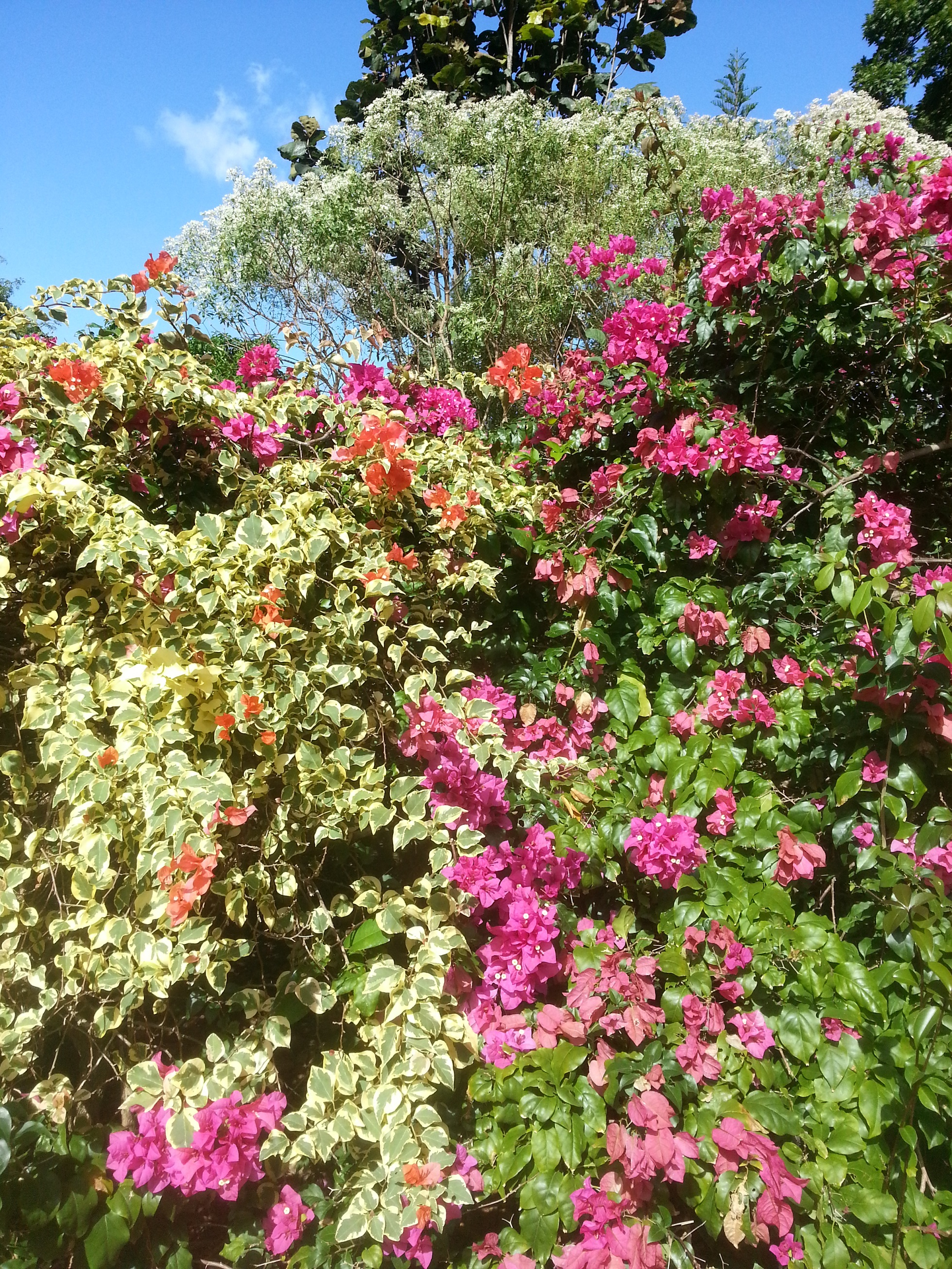 Le jardin Botanique de Deshaie ou jardin Coluche Loliluro en Gwada