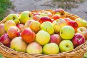 Pomme santé