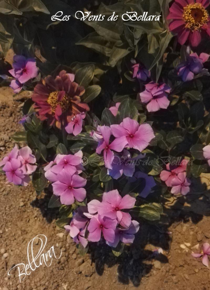 Quelques fleurs locales - 7
