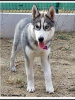 Mylka (4 mois)