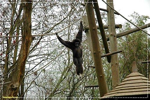 Zoo-Douai 0907