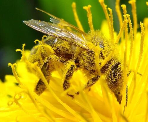 Les abeilles qui démontrent à quel point elles sont indispensables à notre survie