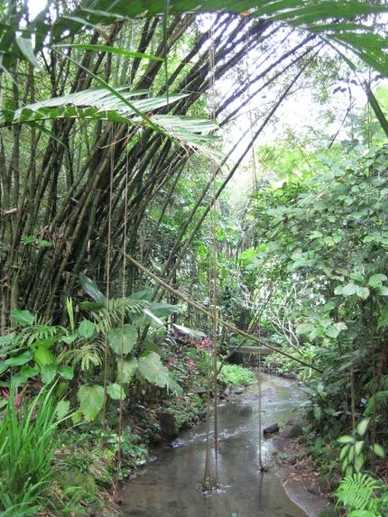 Le jardin botanique d'Ubud, île de Bali