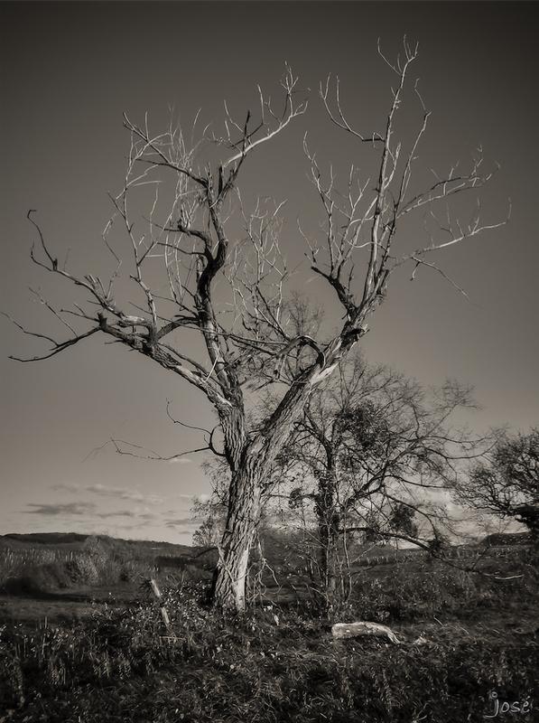 Nature morte.
