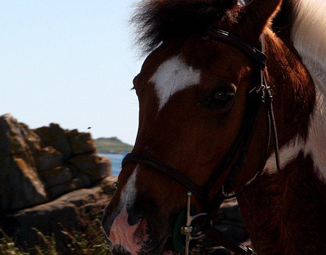 Porz-Bugale-82--43--cheval.jpg1.jpg