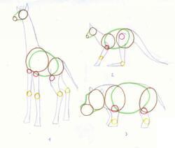Anatomie des animaux