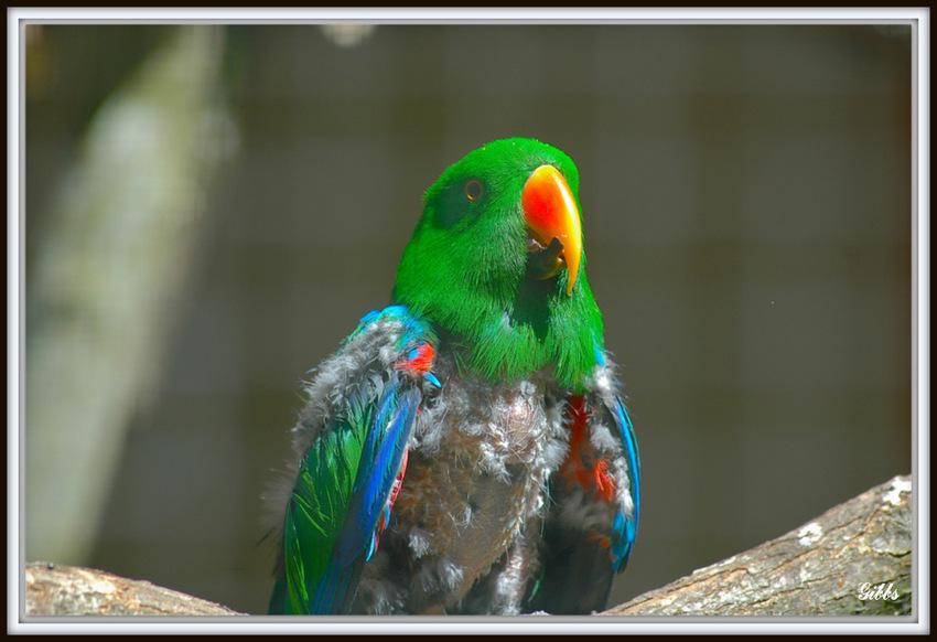 Oiseaux du parc de Beauval