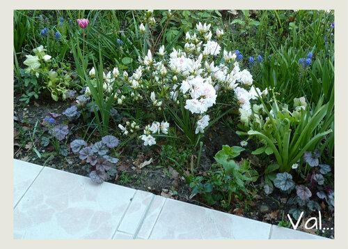 Le jardin...Mai 2017