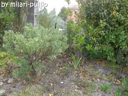 Séance photo 4 (J et L) : Plantation d'un abricotier