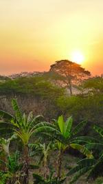 île Ometepe Nicaragua : la vie en communauté,  expérience de la permaculture