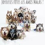 merci aux amis des Malas .. ce chien pas comme les autres :-)))